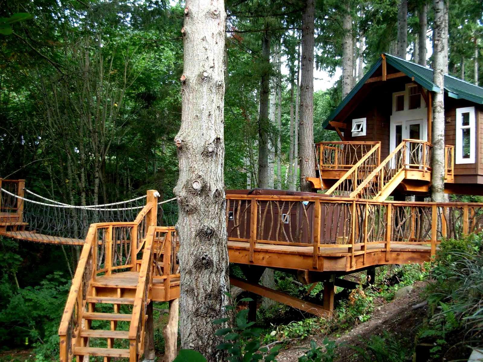 Дома на дереве — фото