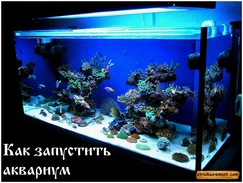 Как запустить аквариум