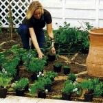 Декоративные растения в открытом грунте