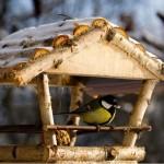 Кормушки для птиц — фотогалерея