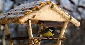 kormushki dlya ptic