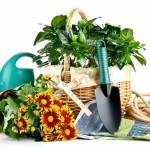 Что нужно сделать садоводу до майских праздников