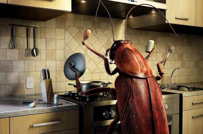 Как правильно избавится от грызунов и насекомых
