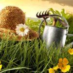 Что нужно сделать садоводу до майских праздников — часть 2