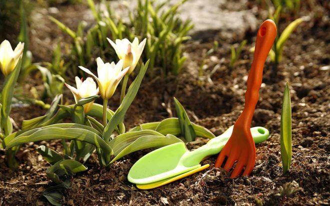 Подготовка сада к весне