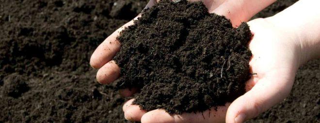Свойства и области применения растительного грунта
