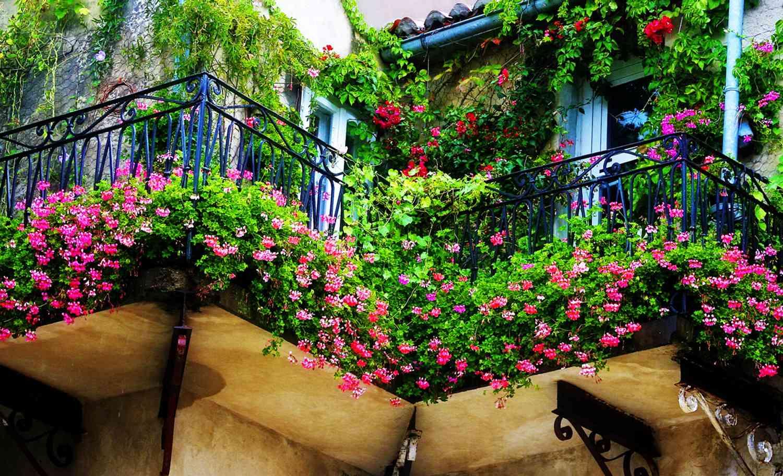 Цветы на солнечный балкон