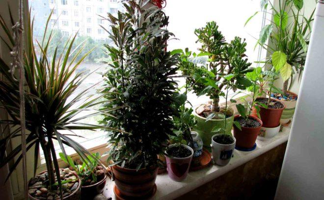 Как правильно выбрать растения для дома