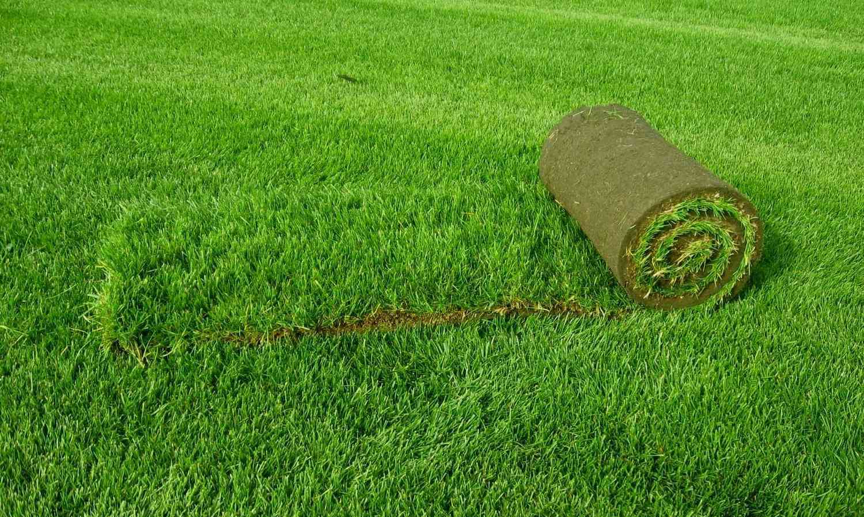 Качественный и долговечный газон на своем участке