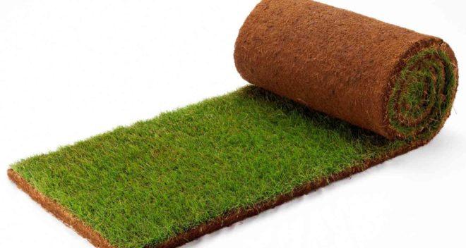 Что такое рулонный газон