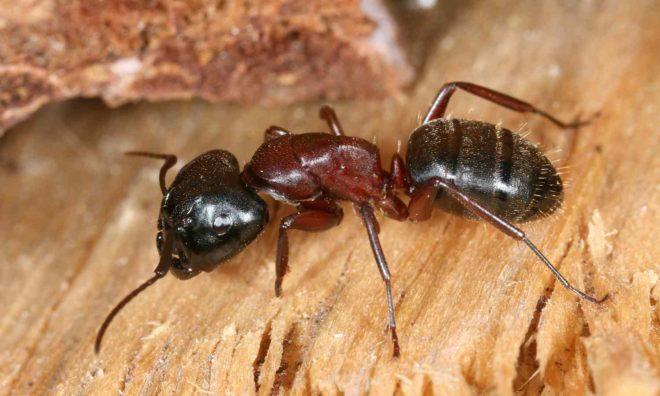 Для чего используется муравьиная кислота