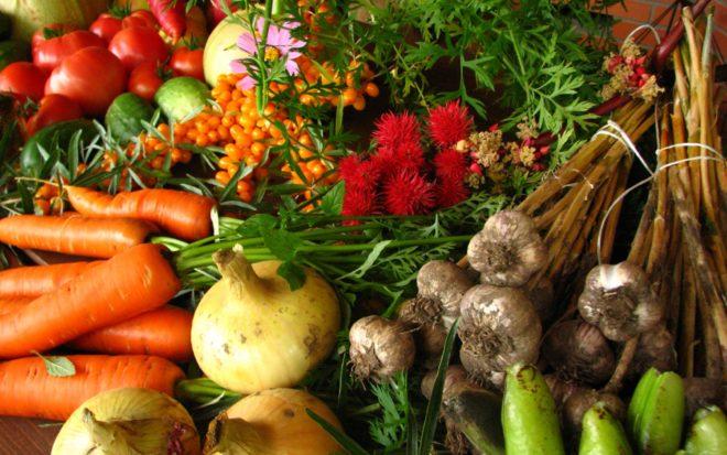 Как правильно вести органическое земледелие