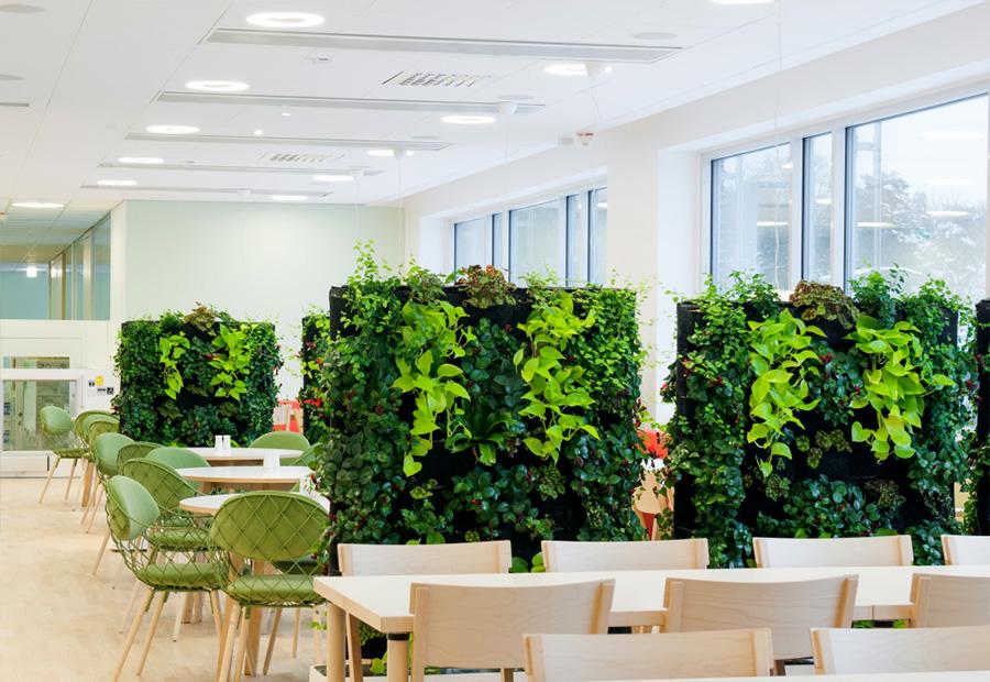 Озеленение интерьера офиса » Креатифф
