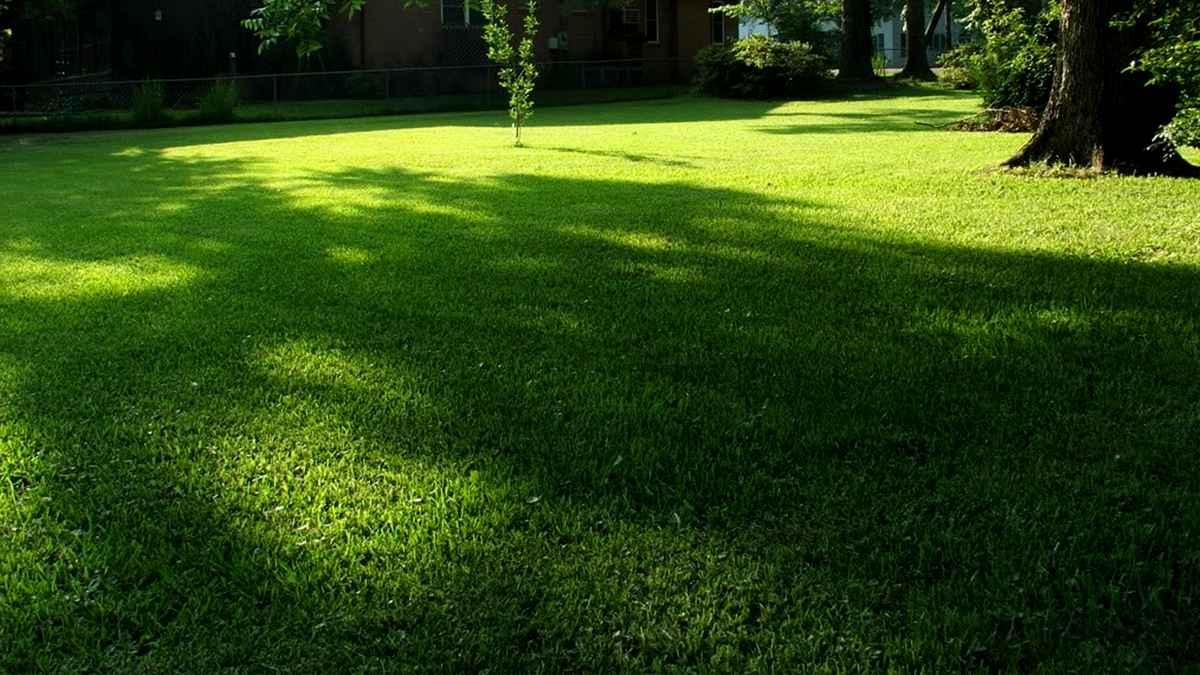 Газонная трава универсальная