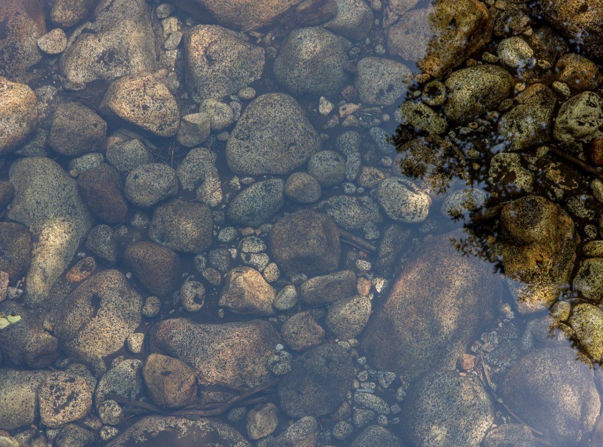 Как обустроить пруд на вашем участке