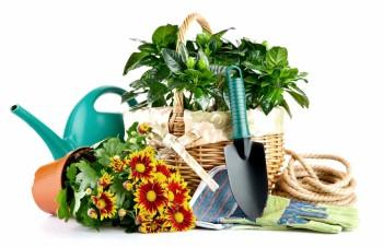 Что нужно сделать садоводу