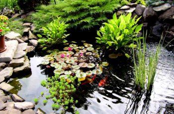 Пара слов про уход за садовым прудом