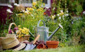 Майская работа на садовом участке