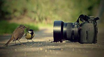 Фотографирование как вид искусства