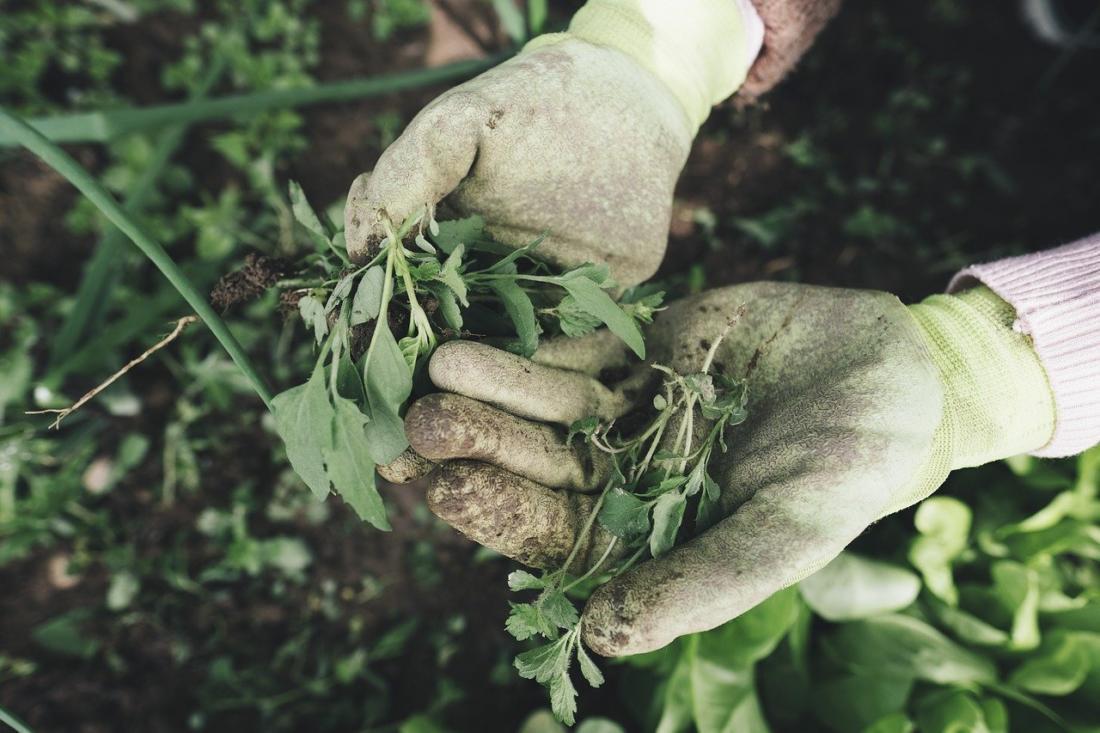 Как подготовить почву к посеву газона