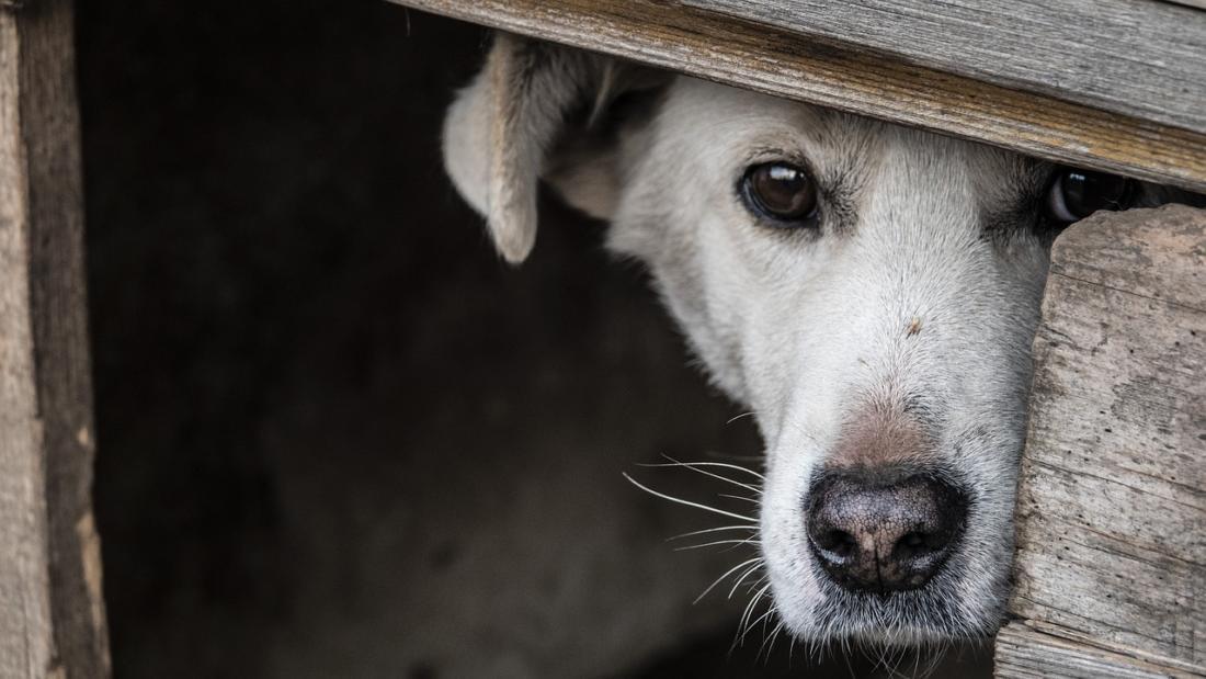 Против ветра, против дождя или строим домик для собак